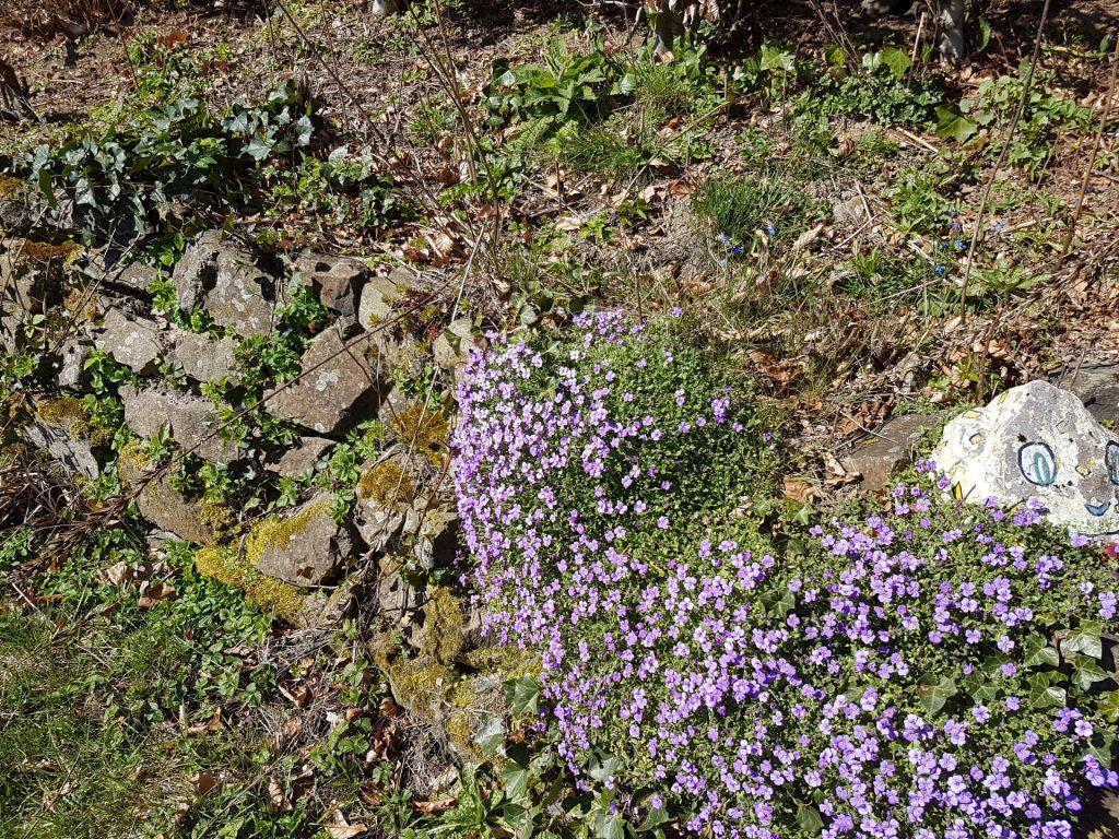 Blaukissen auf einer Natursteinmauer