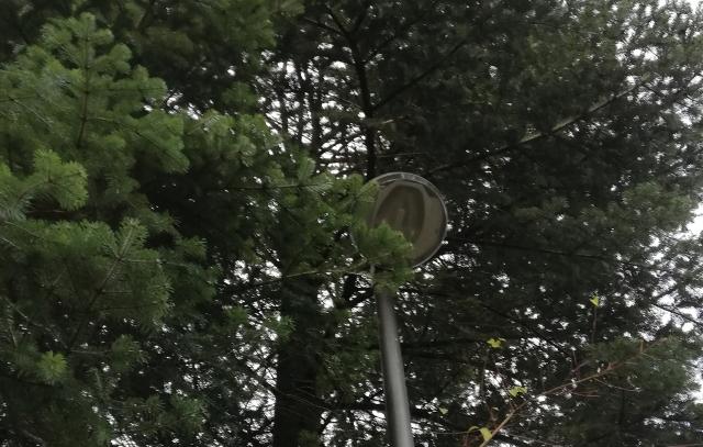Straßenlampe in Ästen