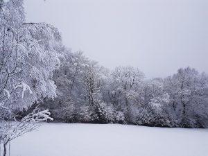 Eine schützende Schneedecke legte sich im Januar 2021 auf das Bergische Land
